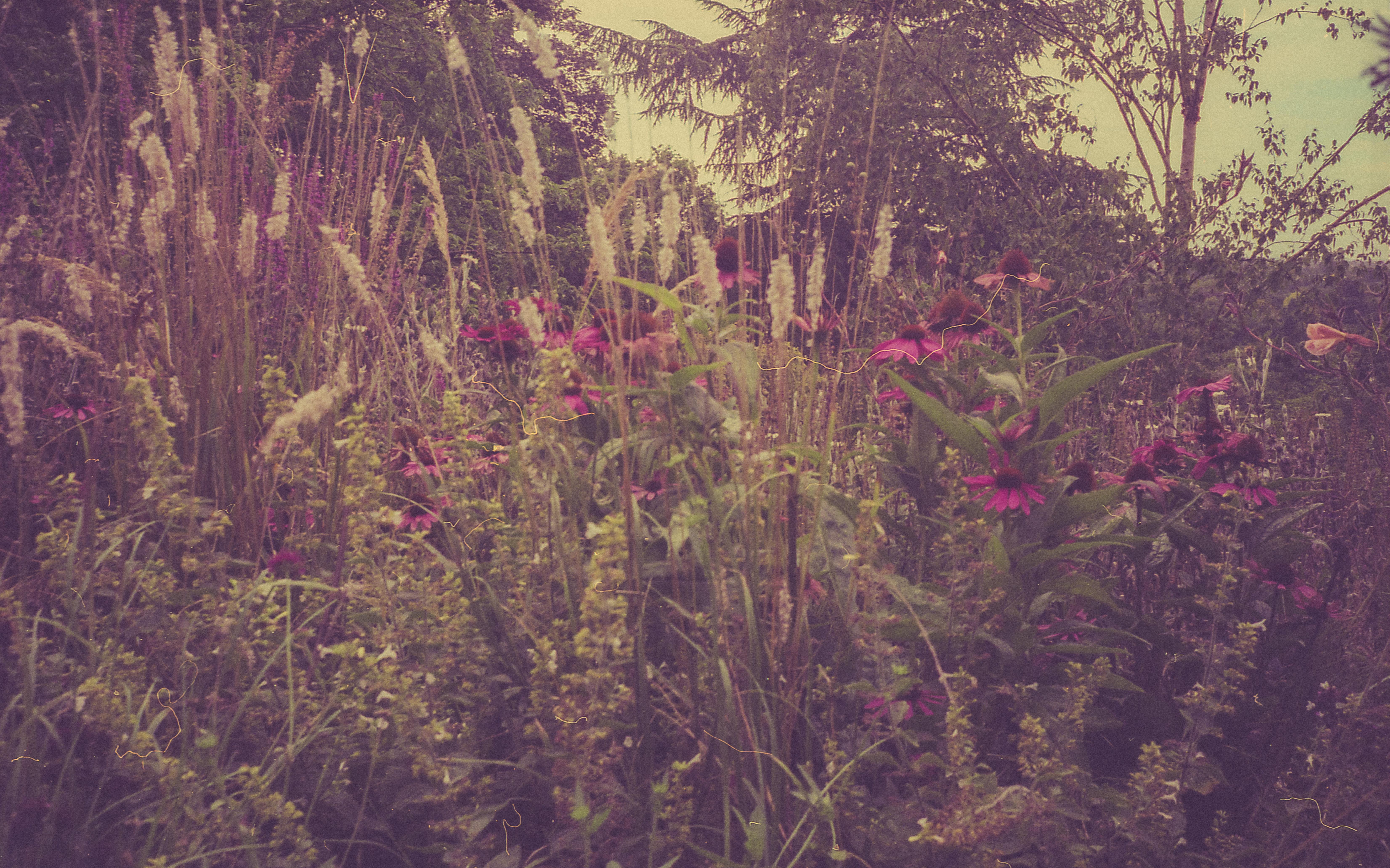 flowers-smaller